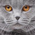 猫が目を合わせない3つの理由