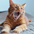 猫がなつかない人の4つの共通点
