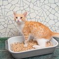 猫のトイレチップはどう選ぶ?システムトイレにおすすめ商品4選