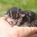 『手乗り猫』人の手の中にすっぽり収まる小さなニャン10連発!