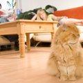 猫は家族に「順位付け」をする?懐かない理由