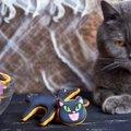 猫にクッキーを与えてはいけない理由と食べたときの対処法