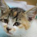 捨て猫を拾ったらやるべきこと~勇気を出して命を助ける~