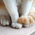 猫がしっぽを追いかける理由や疑う病気