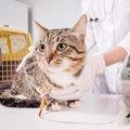 猫の入院費おおよその相場や払えない時の対処法