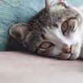猫の手作りおやつのススメ!意外と簡単で安いんです