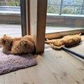 飼い主死去で取り残された猫、独りぼっちの日々を耐え兄弟と幸せに!