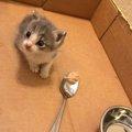 子猫を助けたつもりが、実は自分が助けられていた事に気が付いた女性