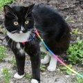 猫の散歩にはハーネスが必要!付け方やおすすめ商品