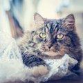 猫がビニールを食べてしまう理由と3つの対策