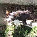 人に傷つけられた猫は人に救われ、エーゲ海も国境も飛び越えた!