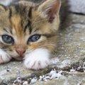 その行為危険かも!猫が悲しむ飼い主の行動5つ