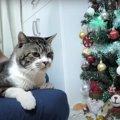 甘えたい猫ちゃん…グッと堪えてツリーを見守る