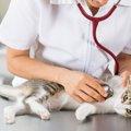 猫に点滴をした時の効果や種類、料金について