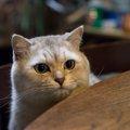 猫がゴキブリを食べちゃった!誤飲による症状やホウ酸団子の恐ろしさ