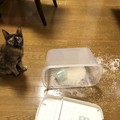 【大災ニャン】散らばる米ときょとん顔の猫さん『あぁ…』が止まらない