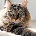 猫用ファーミネーターの評判と使用する際の注意点