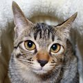 猫が『飼い主と他者の違い』を認識する方法3選