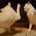 言葉が通じない時はこぶしで語り合う!喧嘩するほど仲がいい猫と犬