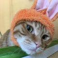 【うさ耳にゃんこ?!】話題の猫用コスプレガチャ「かわいい かわいい…