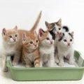 猫を多頭飼いする時のトイレの数と注意点