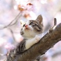 猫が春になると変わる気持ちや体のこと
