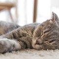 猫のおむつはどのタイミングで使い始める?