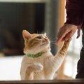 猫が甘えん坊すぎる!飼い主から離れない4つの理由
