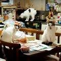 至るところ、猫、猫、猫!多頭飼育崩壊の現場に突入!