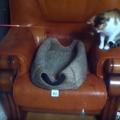 猫じゃらしで遊ぶ猫さん。猫じゃらしを操っている方も猫さん!?