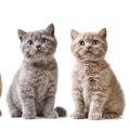 猫の年齢の見分け方とは?体の見た目や行動から予測する!