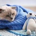 猫が寒いと感じてる時にする7つの仕草