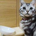 ご飯が欲しい時はこうすればいいにゃ!意思表示のできる猫!