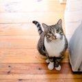 飼い主の方必見!猫に「待て!」を上手に教える方法をご紹介します