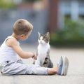 猫語を理解したい!鳴き声から読み取る方法と翻訳アプリ