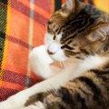 猫が『手を口に入れる』ときの意味4つ