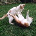 多頭飼いで猫がケンカをする原因と対処法