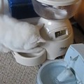 泥棒猫発見!こっそり自動給餌器からゴハンを盗む猫ちゃん