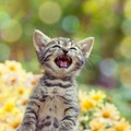 猫は人間の言葉がわかる!?解る言葉と解らない言葉