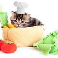 猫にオクラは食べさせても良い?効果や与え方