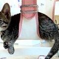 子猫達の個性!それぞれお気に入りの場所を見つける