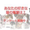 【アンケート調査】あなたの好きな猫の種類は?
