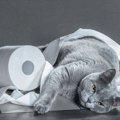 猫が粗相した!トイレでしない理由・対策