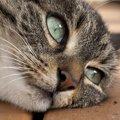 猫の問題行動スプレーの解決策について