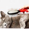 【猫用ブラシ】選び方とお勧めのブラシ5つをご紹介!