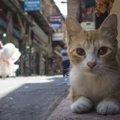 トルコは猫の楽園!猫好きが多い理由
