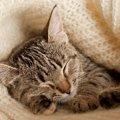 猫の老衰の症状と飼い主がすべきこと