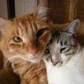 11匹の保護猫との賑やかな生活…教えてもらった大切なこととは?