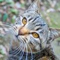 猫が飼い主の『前を歩きたがるとき』の気持ち4つ!ケース別の対応方法…