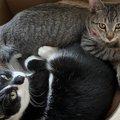 猫との暮らしで飼い主が思う『買わなくてよかったもの』ランキングTOP5